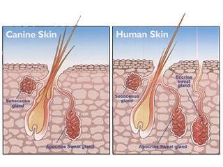 dog skin and human skin