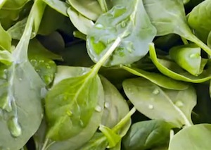 spinach for antioxidants