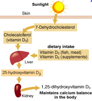vitamin d process