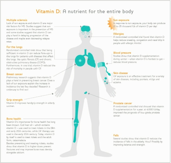What does Vitamin D do?